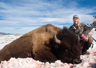Free-Range-Bison-Instinct